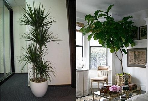 Plantas-artificiais-para-decoração
